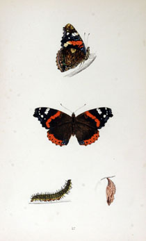 A History of British Butterlies by the Rev. F. O. Morris, B. A., 3rd ed. London 1870